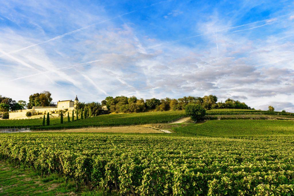 Best Wine Vacations